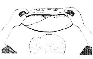 tenugui1-5
